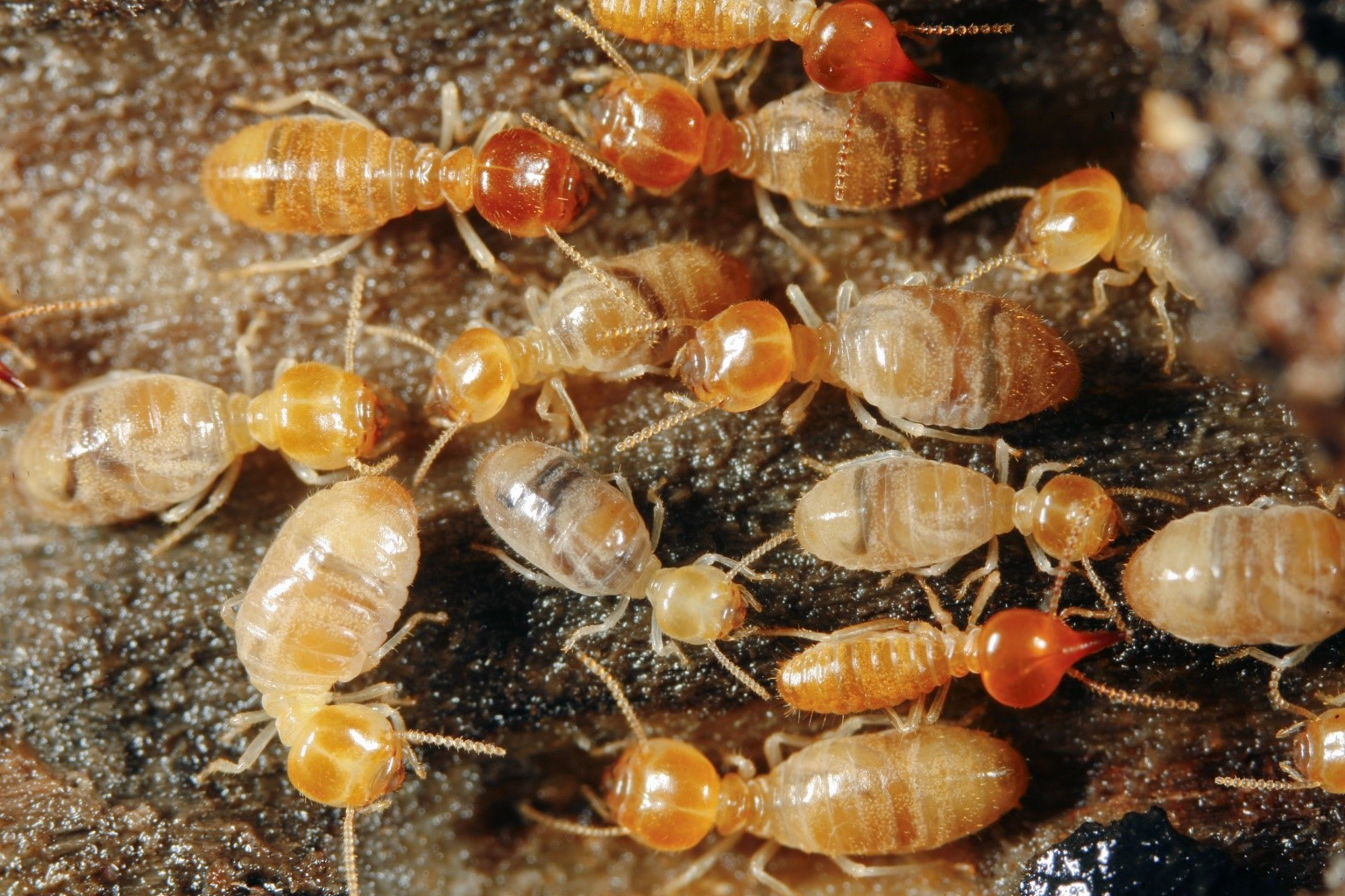 Termites-that-could-have-been-prevented-but-are-now-a-problem
